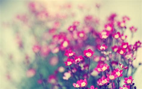 imagenes para fondos de pantalla flores fondo de pantalla flores 1920x1200 fondos de pantalla gratis