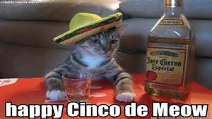 5 De Mayo Memes - happy cinco de mayo 2016 all the memes you need to see