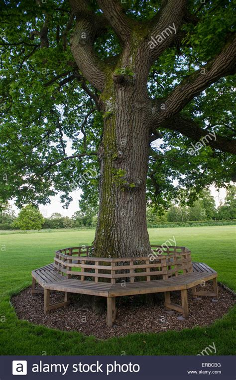 circular bench around tree a circular bench around an oak tree on a village green