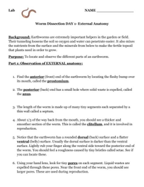 earthworm dissection pre lab worksheet worksheets earthworm dissection worksheet opossumsoft