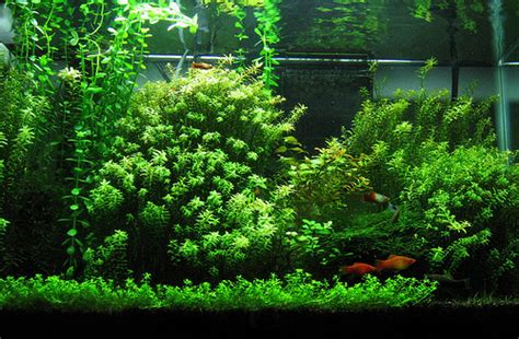 penyubur aquascape co2 by nd pets what does kh in fish keeping tropical fish site