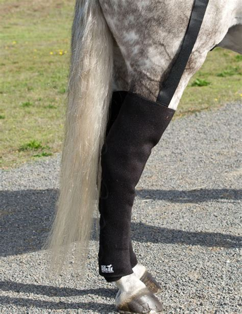 hind leg hind leg equine boots with 16 packs