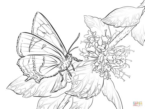 types of butterflies coloring pages brown hairstreak butterfly coloring page free printable