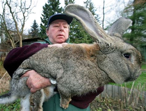 You're an ass: LOOK AT THIS MONSTER BUNNY RABBIT!!!