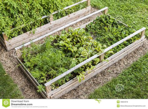 vegetable garden in raised boxes stock photo image 49604918