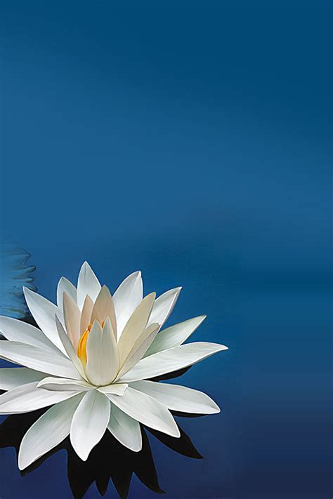 apple zen wallpaper freeios7 lotus flower parallax hd iphone ipad wallpaper