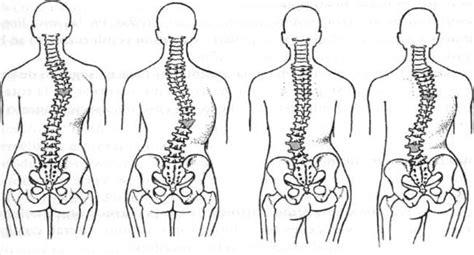 vestibulo anatomia femenina educaci 243 n f 237 sica con amador columna vertebral postura
