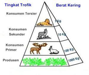 contoh biomassa piramida biomassa jenis contoh kelebihan dan