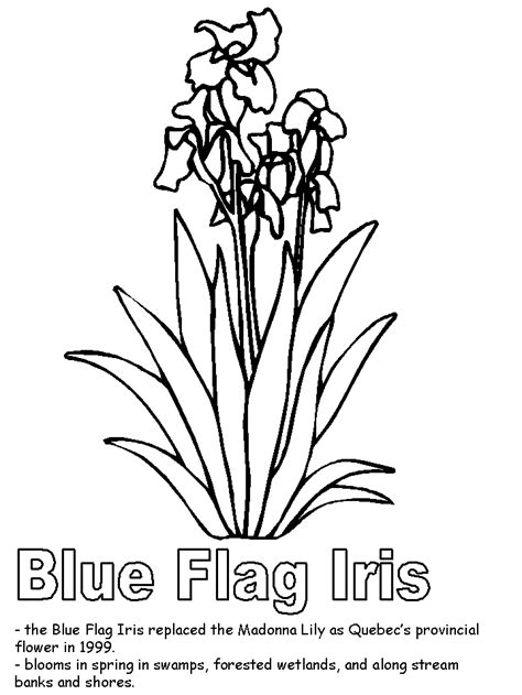 canadian flag coloring page az coloring pages
