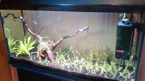 driftwood   plants   freshwater tank