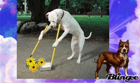 imagenes gif medio ambiente fotos animadas hay que cuidar el medio ambiente para