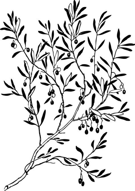 tattoo berwarna png gambar vektor gratis cabang daun tanaman pohon