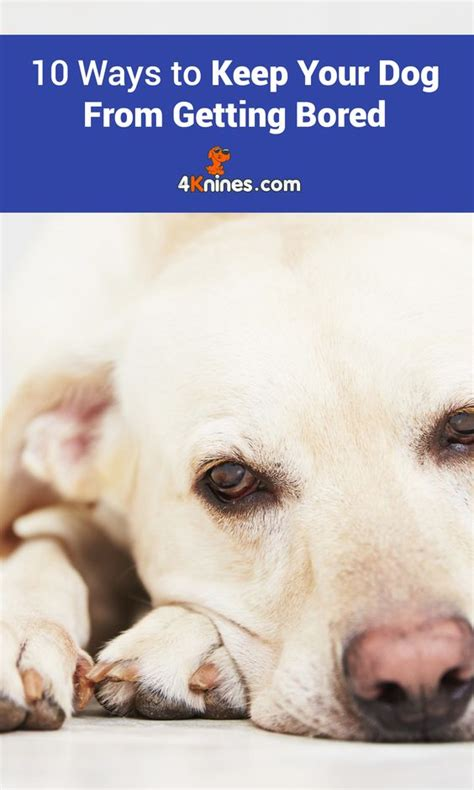 do dogs get bored 10 ways to keep your from getting bored activities creative and read more