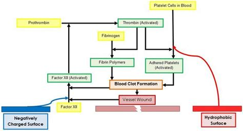 mechanism of blood clotting flowchart proteinfoulingvascularimplants home