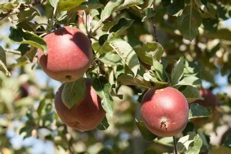 fertilizing fruit trees when and how to fertilize your fruit trees use our