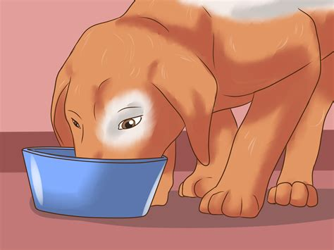 how can a live with hip dysplasia 4 ways to detect canine hip dysplasia wikihow