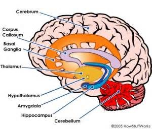 Brain and down syndrome part 1 how the brain works 31 for 21 day