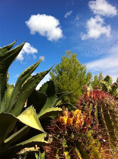 Cactus Botanical Garden Cactus Botanical Garden De Las Nieves Jard 237 N Botanico De Cactus Y Otras Suculentas