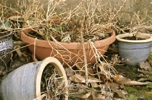 how to bring a dead plant back to why do my plants die greencare landscape