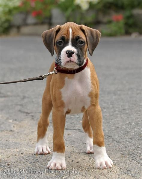 family friendly puppies best 25 breeds ideas on breeds all breeds of dogs and