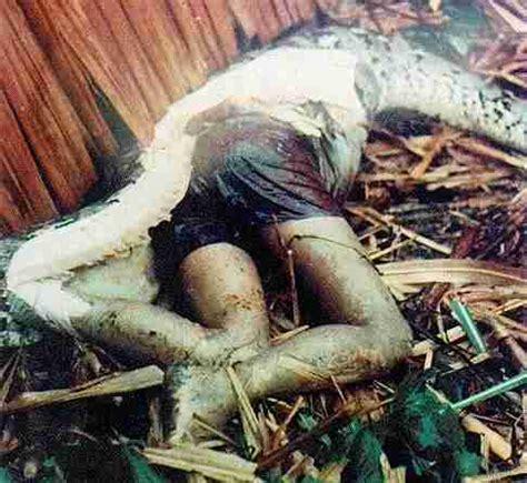 film barat ular di pesawat misteri ular terbesar didunia permadi