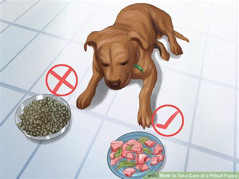 what to feed pitbull puppies 3 ways to take care of a pitbull puppy wikihow