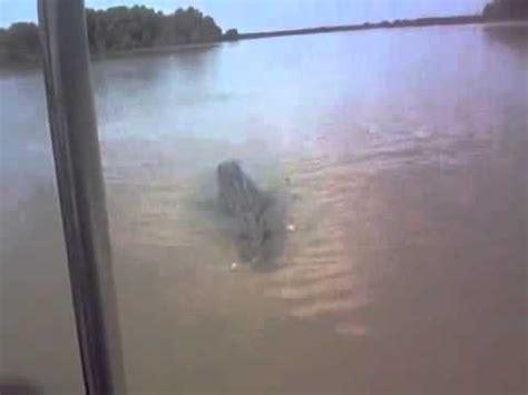 monster crocodile attacks fishing boat crocodile attacks boat up close doovi