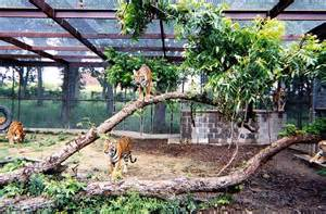Building A Backyard Fence Former Vet Vicky Keahey Invites 27 Unwanted Big Cats Into