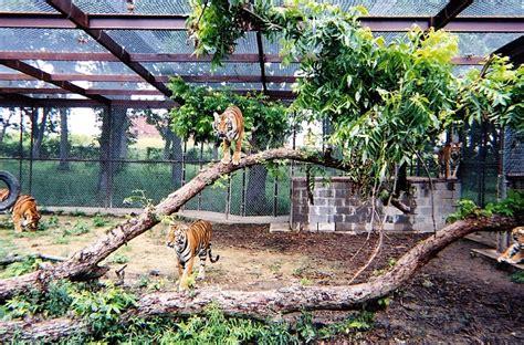 Good Backyard Pets Former Vet Vicky Keahey Invites 27 Unwanted Big Cats Into