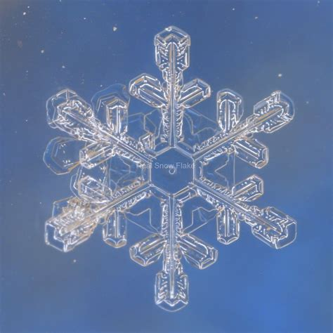 snowflake patterns real real snowflakes www imgkid com the image kid has it