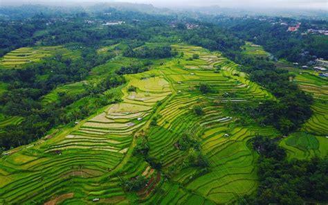 sawah indah  membuatmu makin cinta  indonesia