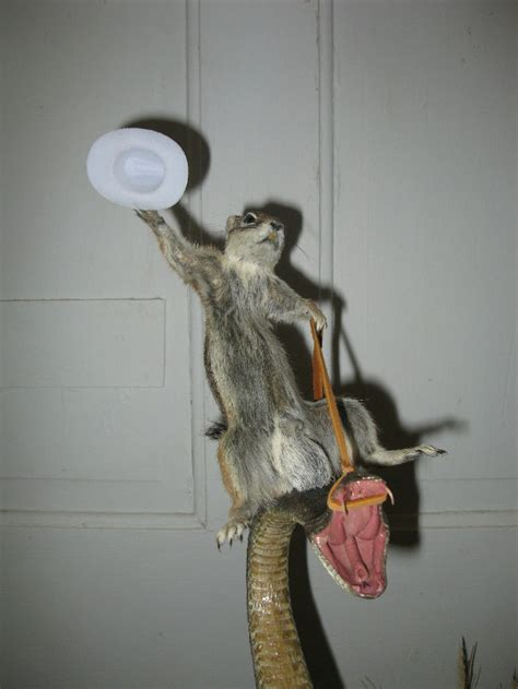 classic taxidermied rodeo squirrel riding rattlesnake geekologie