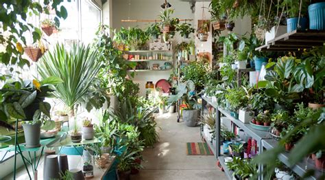 chicago store sprout home