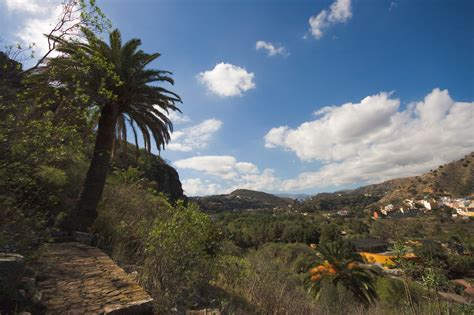 jardin botanico gran canaria jard 237 n bot 225 nico canario viera y clavijo botanic garden