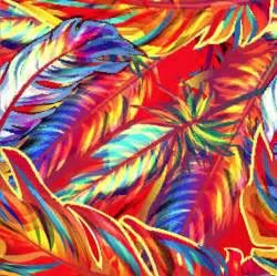 colorful feather colorful feathers free vector graphic