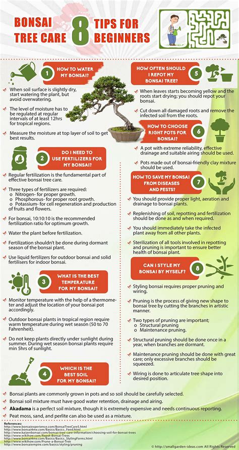 bonsai care manual bonsai tree care 8 tips for beginners infographic
