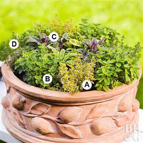 mini herb garden miniature herb garden