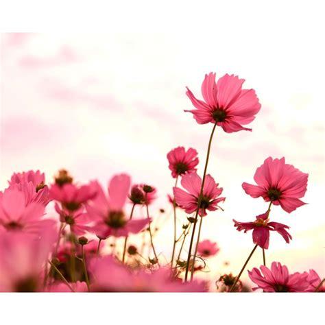 imagenes de rosas injertadas fotomural flores rosas co