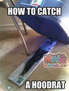 Hood Rat Meme - how to catch a hoodrat nowaygirl humor pinterest