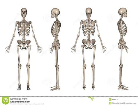 3d le le squelette 3d rendent images stock image 4988134