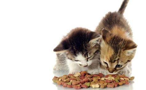 Tempat Makan Anjing Kucing Kecil 5 cara merawat kucing