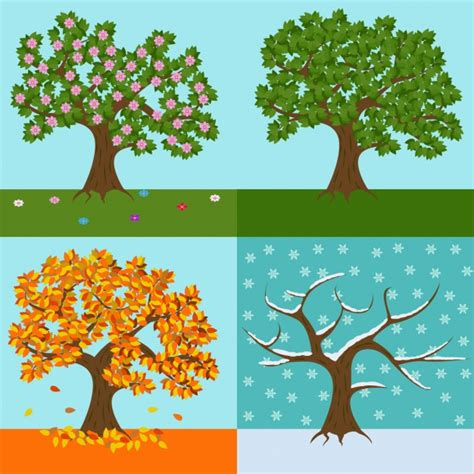 tree seasons come seasons a tree of each season design vector free download