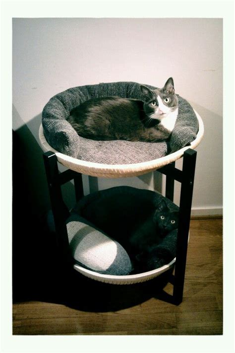 Diy Cat Furniture by Best 25 Cat Furniture Ideas Only On Cat Beds Diy Cat Shelves And Cat Wall
