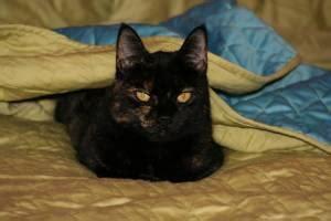 lost  cats  oregon home facebook