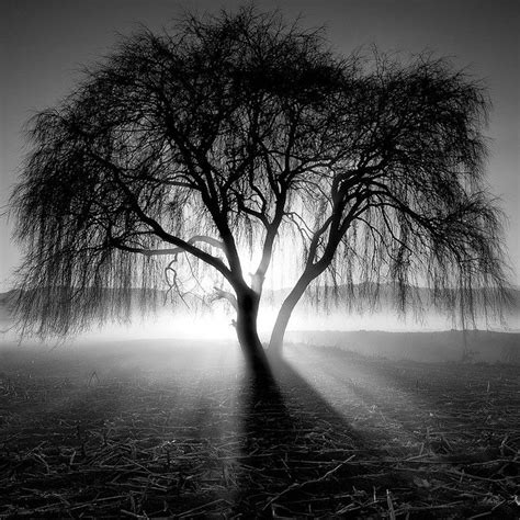 best 25 black and white landscape ideas on pinterest
