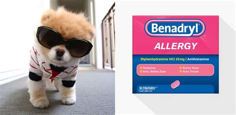 giving benadryl benadryl for dogs www pixshark images galleries with a bite
