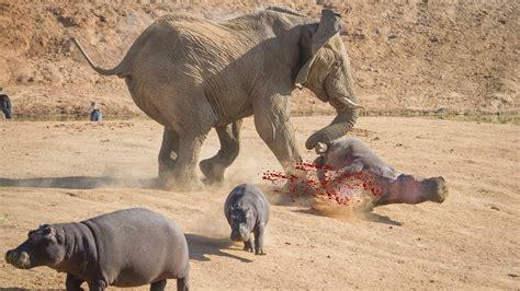 animals fighting animals fighting related keywords animals fighting long