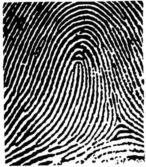 finger pattern meaning fingerprints loop