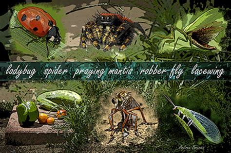 how to keep pests out of vegetable garden 7 tips to keep pests and pesticides out of your garden