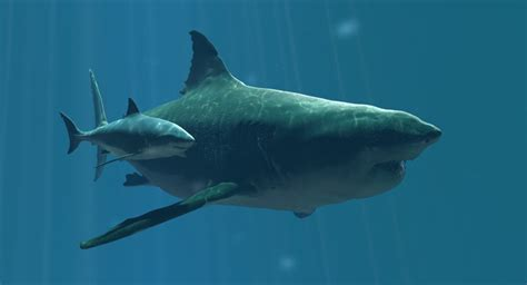 megalodon shark size megalodon shark demands rematch with predator x and moby